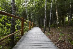 Canada path into the wood. Canada path whit fence into the wood Royalty Free Stock Photography