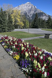 Canada Place Gardens, Banff Stock Photo