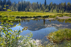 Canada small lake shadow mountains forest summer Royalty Free Stock Photo
