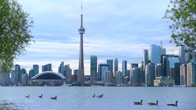 Canada Toronto Establishing Shot with Ducks and Sea.
