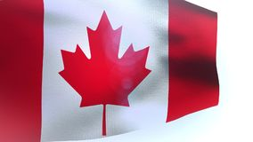 Canada waving flag in the wind wave. Video stock footage