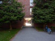 Canaday Hall, двор Гарварда, Гарвардский университет, Кембридж, Массачусетс, США стоковые изображения rf