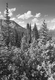 Canadees landschap met bosicefields-brede rijweg met mooi aangelegd landschap alberta Cana Royalty-vrije Stock Fotografie