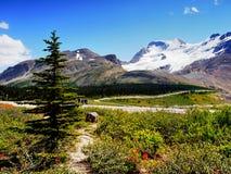 Canadense Montanhas Rochosas, geleira de Athabasca Fotografia de Stock Royalty Free