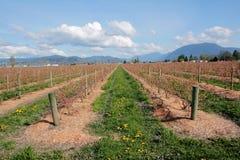 Canadese Berry Farm Landscape Immagini Stock