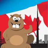 Canadese Bever Royalty-vrije Stock Afbeeldingen