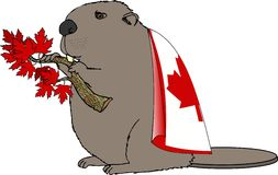 Canadese Bever Royalty-vrije Stock Foto