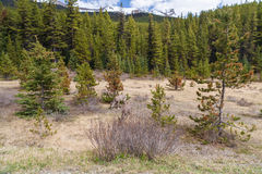 Canadese bos en het wild Stock Foto