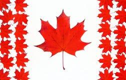 Canadese die vlag van esdoorn rode bladeren wordt gemaakt. Royalty-vrije Stock Afbeeldingen