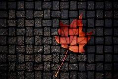 Canadese fatto fotografia stock libera da diritti