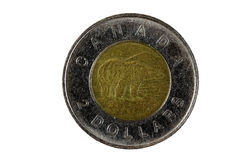 Canadese lato dell'orso della moneta del metallo di due dollari Fotografia Stock Libera da Diritti