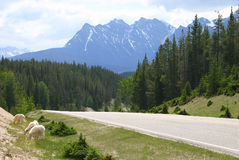 Canadese Rockies II Royalty-vrije Stock Afbeelding