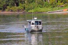 Canadese Salmon Research fotografia stock