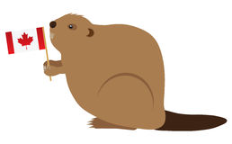 Canadian Beaver Color Vector Illustration. The Canadian Beaver Holding Canada Flag Color Vector Illustration Stock Photo
