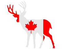 Canadian deer Royalty Free Stock Image
