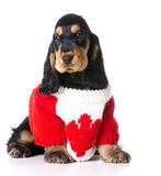 Canadian dog Royalty Free Stock Images