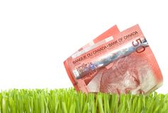 Canadian Dollars in Grass. Close-up of 50 Canadian Dollars bill in grass.Studio isolated Stock Images