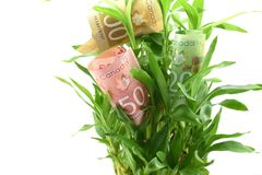 Canadian dollars in green plant leaves, concept of getting dividends or returns from your money, invest it for better future. Canadian dollars in green plant Stock Photography