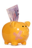 Canadian dollars in a piggy bank cutout Royalty Free Stock Photo