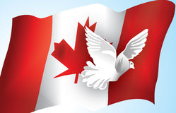 Canadian Flag and a Dove. A dove flies across the Canadian flag as it flutters in the wind royalty free illustration