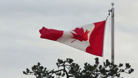Canadian Flag Flapping, Breezy Day. The Canadian national flag against a cloudy background. Canada stock video footage
