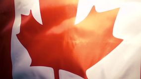The Canadian flag flies and falls down. Slow motion stock footage