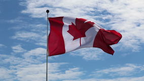 Canadian  flag fluttering on windy day stock video footage