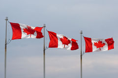 Canadian flag lineup Stock Photography
