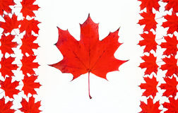 Canadian flag made from maple red leaves. Royalty Free Stock Images