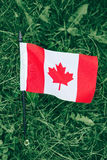 Canadian flag with red maple leaf lying in green grass Stock Photos