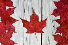 Canadian flag of red maple leaves over weathered white wood. Canadian flag made of red maple leaves over a weathered white wood background Royalty Free Stock Photography