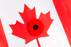 Canadian Flag and Red Poppy Royalty Free Stock Photos
