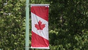 Canadian Flag Vertical Street Banner stock video