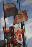 Canadian flags fishingflags flagpoles fishingnetmarkers. Canadian flags fishingmarkers before blue sky on the back of a fishing Royalty Free Stock Photos