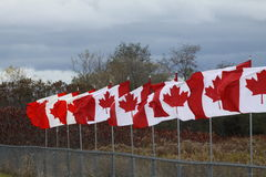 Canadian Flags Royalty Free Stock Photo