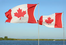 Canadian Flags in Sunshine Stock Photography