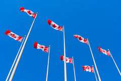 Canadian flags waving over blue sky Royalty Free Stock Images