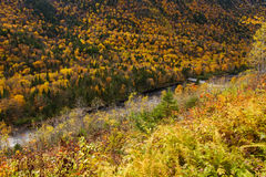 Canadian forest in autumn Royalty Free Stock Photography