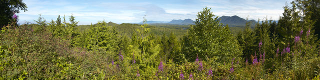 Canadian forest panoramic view. Vancouver. British Columbia Stock Image