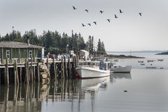 Signs of Spring in Owls Head Maine. Canadian Geese fly over Lobster boats docked in Owls Head, Maine Stock Image