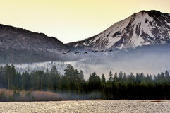 Canadian Geese flying at sunrise, Lassen Volcanic National Park Royalty Free Stock Image