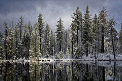 Free Canadian Geese In Reflection Lake, Lassen National Park` Stock Images - 49669864