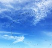 Canadian Geese In Migration. Canadian Geese against a blue sky flying their migration route stock images