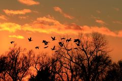Canadian Geese Silhouette with a colorful Sunset royalty free stock photography