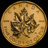 Canadian Gold Maple Leaf Coin .99999 Stock Photos