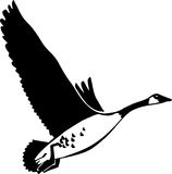 Canadian Goose. Line Art Illustration of a Canadian Goose Stock Photography