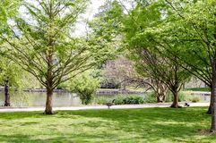 Free Canadian Goose On Lake Centennial Park Nashville, Tennessee Royalty Free Stock Photo - 116430175