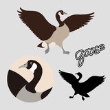 Canadian goose vector illustration style Flat black silhouette Stock Photo