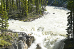 Canadian landscape in Athabasca falls. Alberta. Canada Royalty Free Stock Photo