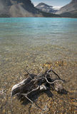 Canadian landscape with Bow lake and dead trunk. Alberta Royalty Free Stock Images